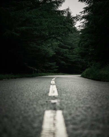 A shot taken close to the floor, looking down the white lines on a road in a conifer forest