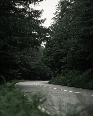 A bend in a road through a conifer forest
