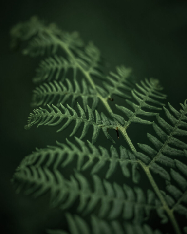 A close-up of a green fern